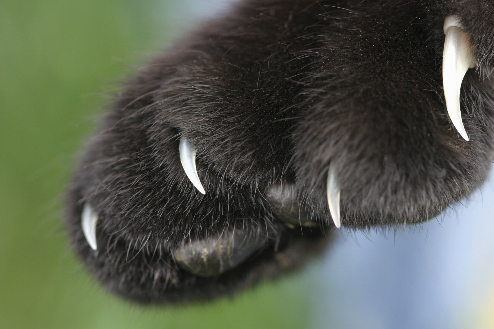Hepatitis C and cat scrathes | Worms & Germs Blog