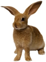 Watch out for rabbit pee | Worms & Germs Blog