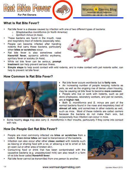 Rabid Horse Minnesota Worms Amp Germs Blog - 430×580